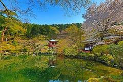 Ιαπωνικό ανθίζοντας κεράσι ναών Daigoji Στοκ εικόνες με δικαίωμα ελεύθερης χρήσης