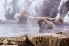 Ιαπωνικό λούσιμο macaque τις καυτές ανοίξεις, Στοκ Εικόνες