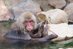 Ιαπωνικό λούσιμο macaque τις καυτές ανοίξεις Στοκ φωτογραφία με δικαίωμα ελεύθερης χρήσης