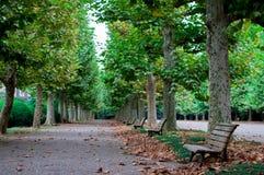 Ιαπωνικό πάρκο σε shinjuku-Gyoen, Ιαπωνία Το καλοκαίρι είναι πολύ πράσινη εποχή της Ιαπωνίας Θερινή περίοδο του Κιότο είναι ο πολ στοκ φωτογραφία με δικαίωμα ελεύθερης χρήσης