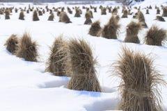 Ιαπωνικό πεδίο χιονιού Στοκ Φωτογραφίες