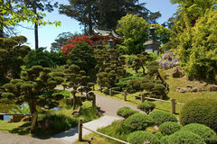 ιαπωνικό τσάι σπιτιών Στοκ Εικόνα