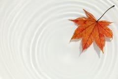 Ιαπωνικό υπόβαθρο 2 σφενδάμνου και κυματισμών Στοκ Εικόνες