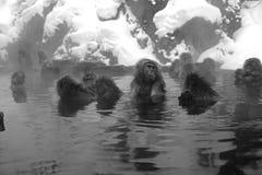 Ιαπωνικό Macaque στο Ναγκάνο Στοκ Εικόνες
