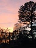 διαστημικά δέντρα κειμένων ηλιοβασιλέματός σας Στοκ Φωτογραφία
