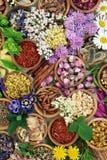 Ιατρικά λουλούδια και χορτάρια Στοκ Εικόνα