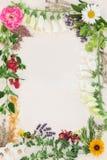 Ιατρικά σύνορα λουλουδιών και χορταριών Στοκ Εικόνες