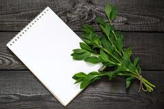 Ιατρικές εγκαταστάσεις Polygonum aviculare ή κοινά knotgrass Στοκ εικόνες με δικαίωμα ελεύθερης χρήσης