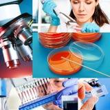 Ιατρική έρευνα Στοκ Εικόνες