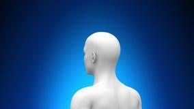 Ιατρική ανίχνευση ακτίνας X - εγκέφαλος ελεύθερη απεικόνιση δικαιώματος