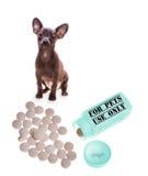 ιατρική κτηνιατρική Στοκ φωτογραφία με δικαίωμα ελεύθερης χρήσης
