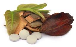 Ιατρικό arjuna Terminalia με τα χάπια Στοκ φωτογραφία με δικαίωμα ελεύθερης χρήσης