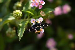 λιβάδι λουλουδιών πεταλούδων απογεύματος αργά φυσικό Στοκ εικόνες με δικαίωμα ελεύθερης χρήσης