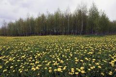 λιβάδι Στοκ φωτογραφίες με δικαίωμα ελεύθερης χρήσης