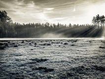 λιβάδι Στοκ Φωτογραφία