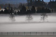 λιβάδι misty Στοκ Εικόνες