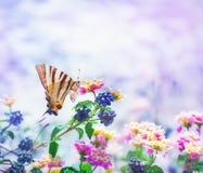 λιγοστό swallowtail πεταλούδων Στοκ εικόνα με δικαίωμα ελεύθερης χρήσης