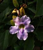 Ιδέες κηπουρικής ενός πορφυρού λουλουδιού στοκ φωτογραφία με δικαίωμα ελεύθερης χρήσης