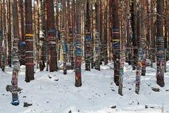 Ιερά δέντρα Στοκ φωτογραφίες με δικαίωμα ελεύθερης χρήσης