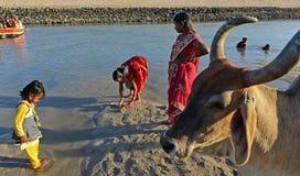 Ιερή αγελάδα Στοκ φωτογραφία με δικαίωμα ελεύθερης χρήσης