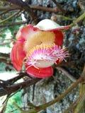 Ιερό λουλούδι άλατος στον κήπο Στοκ εικόνα με δικαίωμα ελεύθερης χρήσης