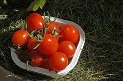 ΙΙΙ veggies στοκ εικόνα με δικαίωμα ελεύθερης χρήσης