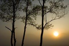 ΙΙ ήλιος τρία δέντρα στοκ φωτογραφίες