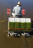 ΙΙ ρύζι καλλιεργητών Στοκ Εικόνα