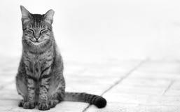 ικανοποιημένη γάτα φωτογραφία Στοκ Φωτογραφία