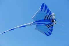 Ικτίνοι που πετούν σε έναν μπλε ουρανό Ικτίνοι των διάφορων μορφών Στοκ Εικόνα