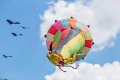 Ικτίνοι που πετούν σε έναν μπλε ουρανό Ικτίνοι των διάφορων μορφών Στοκ φωτογραφία με δικαίωμα ελεύθερης χρήσης