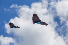 Ικτίνοι που πετούν σε έναν μπλε ουρανό Ικτίνοι των διάφορων μορφών Στοκ εικόνες με δικαίωμα ελεύθερης χρήσης
