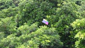 Ικτίνος που κολλιέται σε ένα δέντρο σε έναν κήπο στο Νέο Δελχί Στοκ εικόνα με δικαίωμα ελεύθερης χρήσης