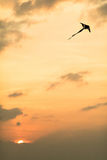 Ικτίνος στο ηλιοβασίλεμα Στοκ εικόνα με δικαίωμα ελεύθερης χρήσης