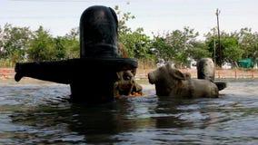 Ινδή αφοσίωση στον ποταμό Ganga στην Ινδία απόθεμα βίντεο