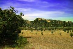 Ινδία Καλλιεργήσιμο έδαφος με τις φυτείες των φοινικών καρύδων, οπωρωφόρα δέντρα α Στοκ Φωτογραφίες