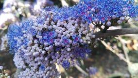 Ινδία Gokarna λουλούδι ανασκόπησης φ&ups Στοκ Φωτογραφίες
