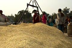Ινδική αγορά ορυζώνα στοκ εικόνα με δικαίωμα ελεύθερης χρήσης
