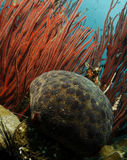 ινδική Ερυθρά Θάλασσα μαξ& Στοκ φωτογραφία με δικαίωμα ελεύθερης χρήσης