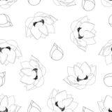 Ινδική περίληψη λωτού στο άσπρο υπόβαθρο Στοκ εικόνα με δικαίωμα ελεύθερης χρήσης
