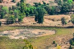 Ινδική τοπ arial άποψη αγροτικών τομέων και δέντρων από τους λόφους/βουνό ενός αγροτικού χωριού της Ινδίας Στοκ εικόνα με δικαίωμα ελεύθερης χρήσης