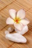 ινδικός κάλαμος χαλικιών λουλουδιών ανασκόπησης frangipane Στοκ Εικόνα