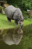 Ινδικός ρινόκερος στην όμορφη φύση που φαίνεται βιότοπος Στοκ φωτογραφία με δικαίωμα ελεύθερης χρήσης