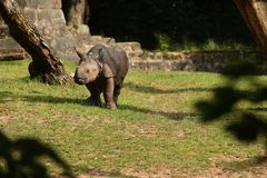 Ινδικός ρινόκερος στην όμορφη φύση που φαίνεται βιότοπος Στοκ Φωτογραφίες