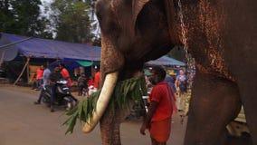 Ινδικό άτομο που οδηγά έναν ελέφαντα, Thrissur Poonam απόθεμα βίντεο
