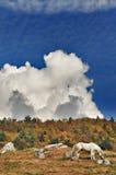 ινδικό θερινό λευκό αλόγω Στοκ φωτογραφία με δικαίωμα ελεύθερης χρήσης