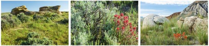 Ινδικό κολάζ βουρτσών χρωμάτων χλωρίδας ερήμων Στοκ Φωτογραφίες