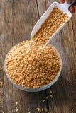 Ινδικό σιτάρι σίτου, σιτάρι σίτου στο κύπελλο στοκ εικόνα