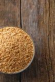 Ινδικό σιτάρι σίτου, σιτάρι σίτου στο κύπελλο στοκ φωτογραφίες με δικαίωμα ελεύθερης χρήσης