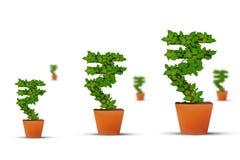 Ινδικό σύμβολο ρουπίων αύξησης χρημάτων στοκ εικόνες με δικαίωμα ελεύθερης χρήσης